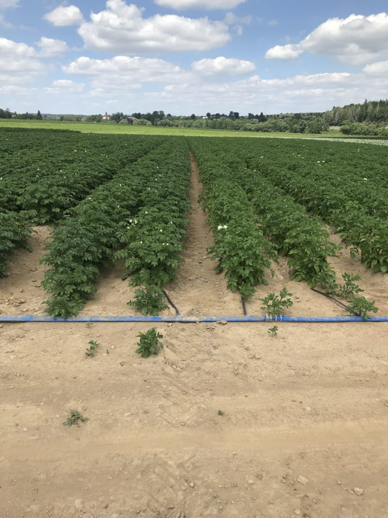 Figure 4.: Some parts of the fields are controlled irrigated and the effect of irrigation on the CWSI value is examined