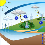 Effects of forests on water and climate at local, regional and continental scales through change in water and energy cycles.